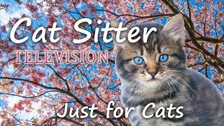 Cat Sitter Television - (For Cats Only) - Please Subscribe