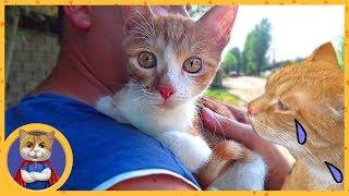 Отдаем спасенного котенка Кексика в добрые руки