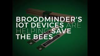 Broodminder's IoT devices are helping save the bees thumbnail