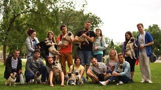Мопсовстреча в Москве 11.07.15 Pugs meeting playing running funny pug games