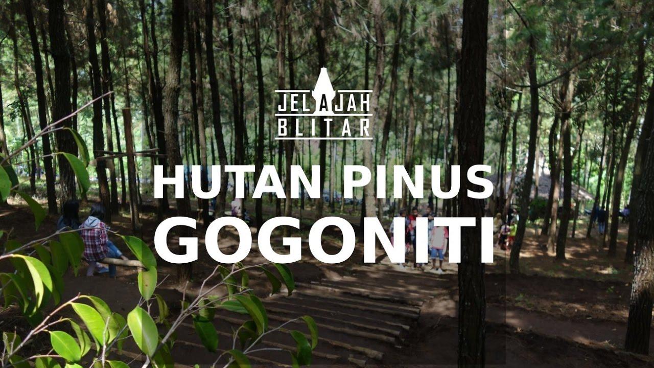 Wisata Hutan Pinus di Gogoniti Kesamben Blitar