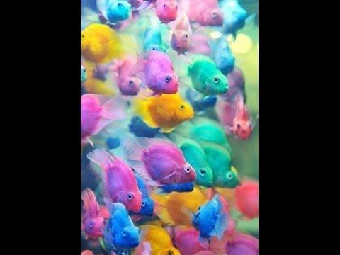 Como Desenhar Peixinhos Coloridos Youtube