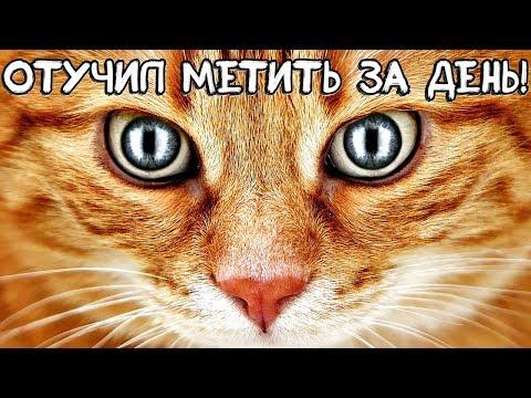 100% рабочий способ отучить кота метить территорию дома! Как отучить кота метить территорию?