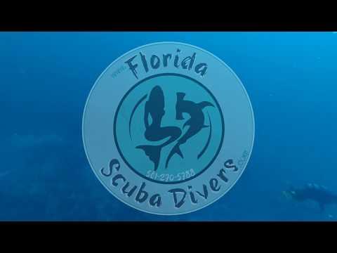 Sailfish Greets Divers