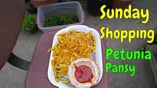 Thanda Mosam & Potato Fries  My Sunday Shopping Petunia and Pansy Saplings
