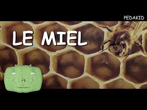 PEDAKID - LE MIEL (vidéo pédagogique)