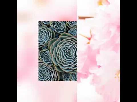 รูปดอกไม้สวยๆ  😊😊😊