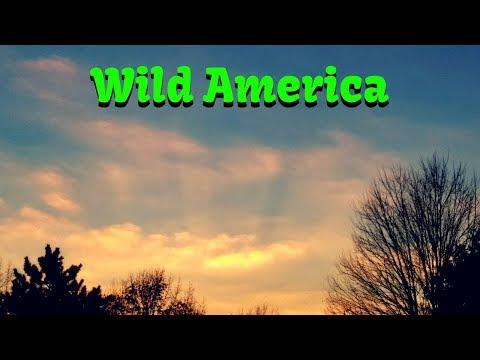 Wild America - Rock Hits 🎼#rocknroll