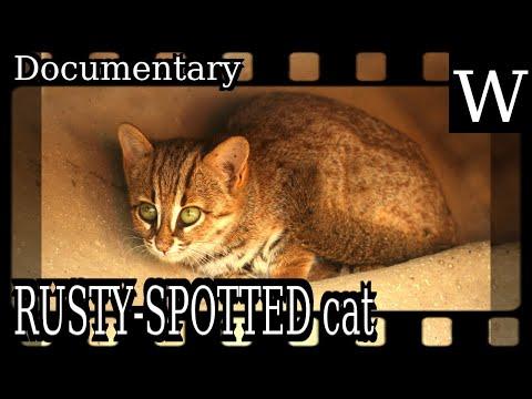 RUSTY-SPOTTED cat - WikiVidi Documentary