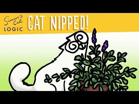 Why do cats go crazy for Catnip? - Simon's Cat | CAT LOGIC #15