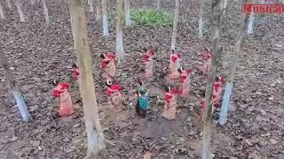 misik koi maina By neel akash nilakshi Neog latest new Assamese video