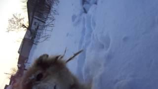 Бегаем с собакой зимой