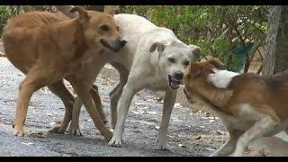 Hilarious street dogs stuck together during mating