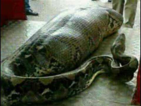 Плохо ли убивать змей