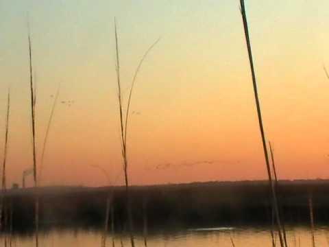 LI Duck hunting in reynolds channel
