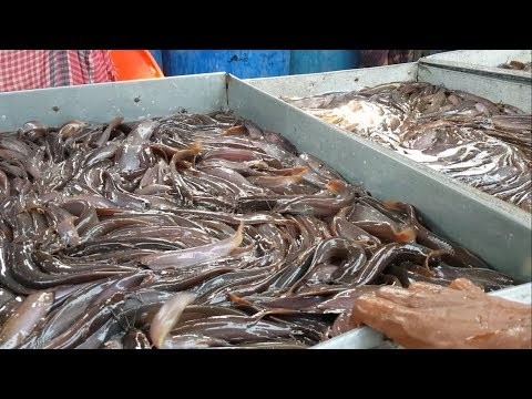 Live Fish Market / Most of The Fishes Are Alive & Fresh / Biggest Whole Sale Bazar Bangladesh