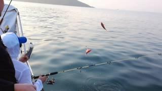 Смотреть Морская Рыбалка На Самуи - Морская Рыбалка На Самуи