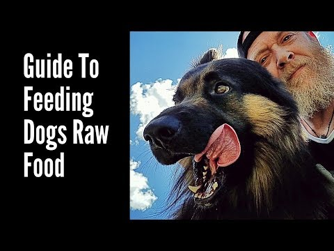Guide To Feeding Dogs RAW Food