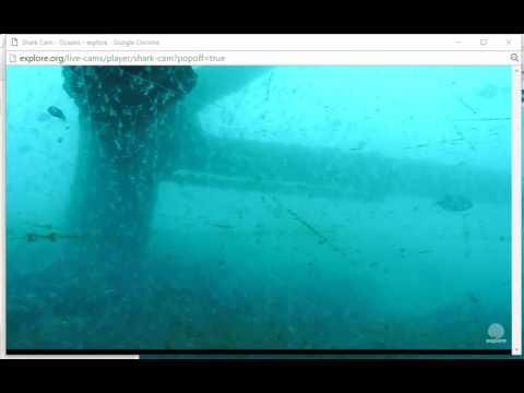 Frying Pan Tower Shark Cam Camera Movement Youtube