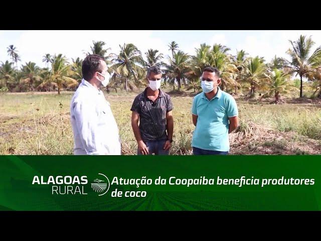 Atuação da Coopaiba beneficia produtores de coco no litoral sul de Alagoas
