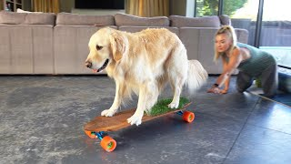 TEACHING OUR DOG TO SKATEBOARD!