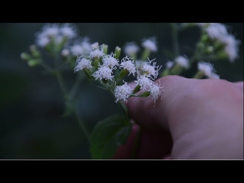 3-obscure-wild-plants-you-might-see-while-foraging!