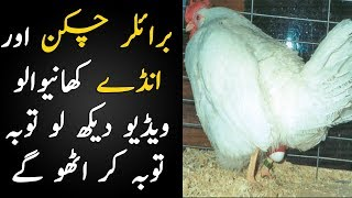 Broiler Chicken And Its Negative Impact on Your Health | Broiler Chicken Problems | TUT