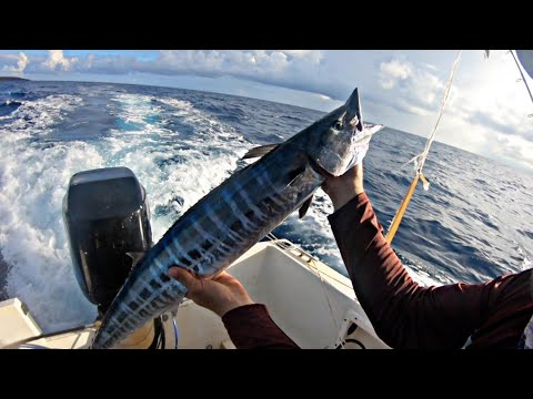 #fishing                                         Hand Lining A Wahoo + Catch And Cook    Ep55