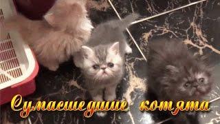 как сделать гнездо для кошки с котятами