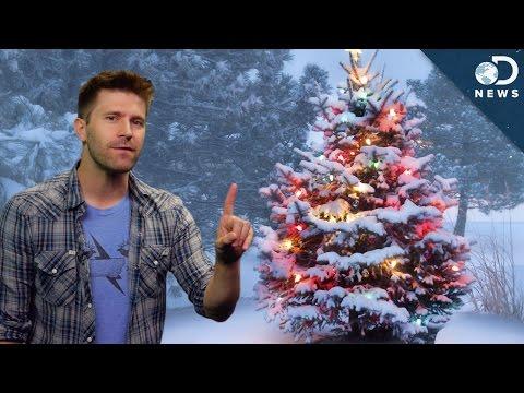 Christmas Trees: Real vs. Fake