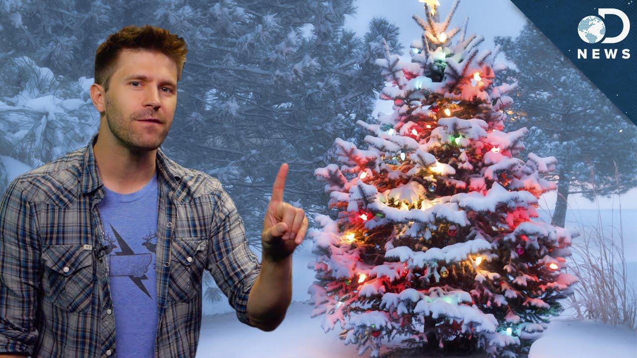 christmas trees real vs fake