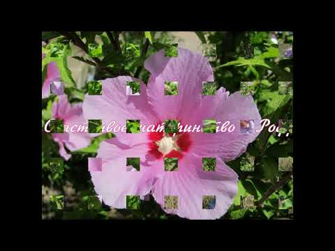 День 6 Счастливое материнство в Роду #Род#МатеринствоВРоду#МолитвыЗаРод#РодовыеМолитвы#