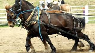 Work horses pull more than 9000 lb. to start the stampede