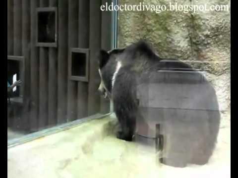 Heavy Metal Bear - El Oso Heavy - YouTube