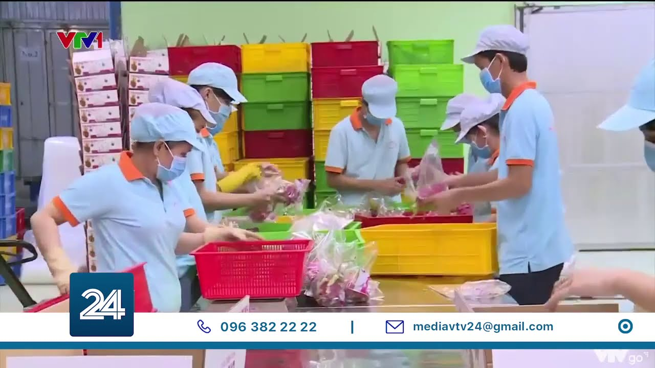 Đa dạng hoá sản phẩm nông sản đáp ứng nhu cầu người tiêu dùng châu Âu trong Covid-19   VTV24