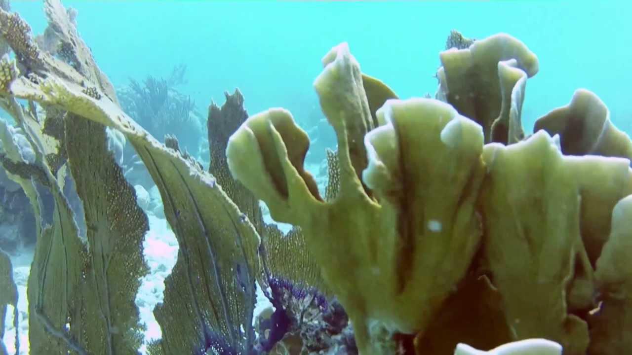2423, Arrecife algas corales y vida marina con corriente [Raw ...