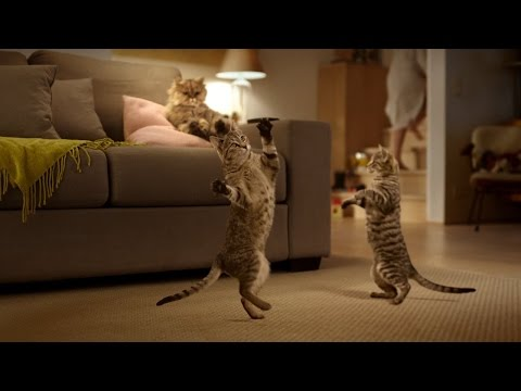 Cats Dancing to Music 2016 #1