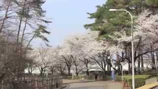 2015年 早稲田大学本庄高等学院紹介