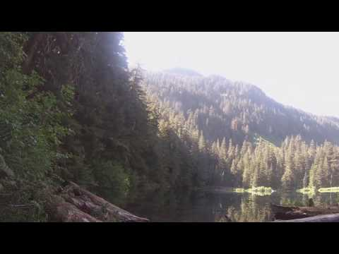 Several Minutes On Carbon River Trail