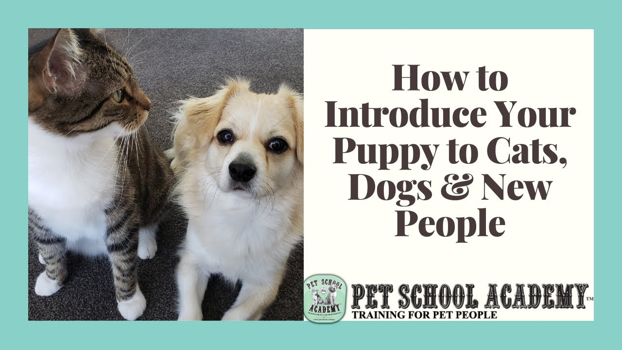how to introduce a puppy to cats