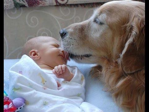 Perros Cariñosos Jugando Con Bebes A Besos Y Abrazos - Videos De Perros Tiernos