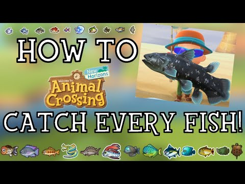 How To Catch Every Fish In Animal Crossing New Horizons - New Horizons Fishing Guide