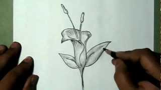 How to draw Bell shaped beautiful flower