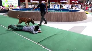 Dog Attack At Robinsons Mall In Iloilo City, Philippines ~ 1st Annual Dog Lover's Show