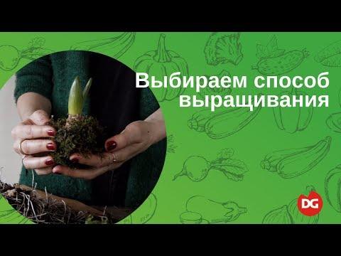 видео: №3 Как выбрать способ выращивания растений