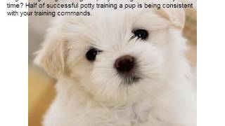 How To Potty Train Your Havanese Puppy As Quickly As Possible