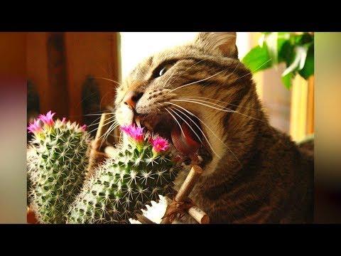 Смешные кошки и собаки ИЮЛЬ 2019 Новые приколы с котами, смешные коты 2019 funny cats animals #90