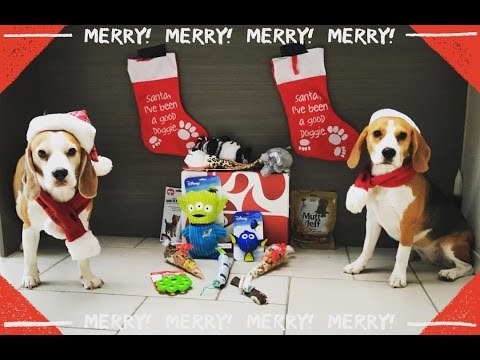 Cute Dogs Opening Their Christmas Presents Having A Blast!