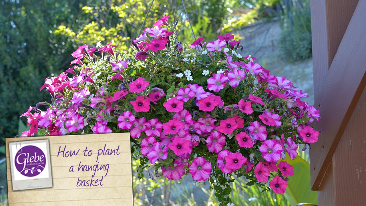Youtube Hanging Flower Baskets : How to plant a hanging basket