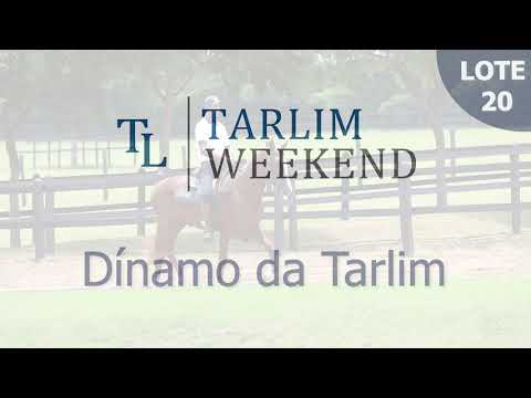 Lote 20 - Dínamo da Tarlim (Potros Tarlim)